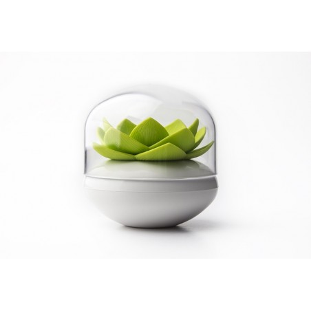 Qualy Lotus Cotton Bud Holder - Green